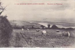 Cp , 50 , LE MONT-SAINT-MICHEL , La Baie , Moutons Et Pâturages - Le Mont Saint Michel