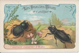 CHROMO  - Les Insectes Utiles - Géotrupe Changeant Et Blaps - Trade Cards