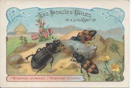CHROMO  - Les Insectes Utiles - Nécrophore Germanique, Nécrophore Fossoyeur - Trade Cards