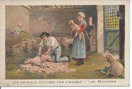 CHROMO - CAFE MARTIN - Les Animaux Utilisés Par L'homme - Les Moutons - Tea & Coffee Manufacturers