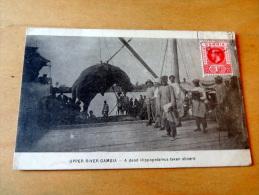 Carte Postale Ancienne : GAMBIA : A Dad Hippopotamus Taken Aboard, Stamp - Gambie