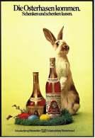 Reklame Werbeanzeige  -  Scharlachberg Meisterbrand  ,  Die Osterhasen Kommen  ,  Von 1973 - Alkohol