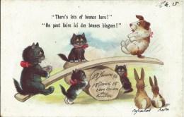 Fantaisie Chat - There's Lots Of Bounce Here! - On Peut Faire Ici De Bonnes Blagues - Chats