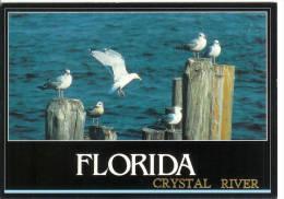 Florida - Crystal River - Seagulls On The Lookout - Etats-Unis