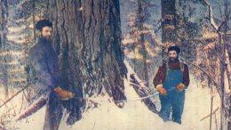 Downing Timber Northern Woods - Beau Pplan De Bucherons Avec Un Passe Partout - Canada