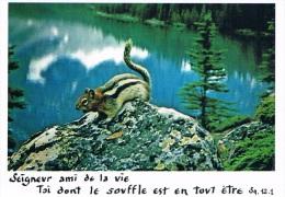 Seigneur Ami De La Vie, Toi Dont Le Souffle Est En Tout être - Collection Bible, Chipmunk - BURES SUR YVETTE - 1990 - Philosophie & Pensées