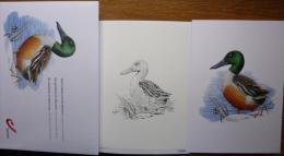 2013-juillet-enveloppe Collector A Buzin N°01345-canard - 1985-.. Oiseaux (Buzin)