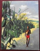 Image Collection Des Tropiques A Votre Table Offert Par Astra La Vanille - Otros