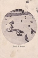VENEZIA  - SALUTI VG AUTENTICA 100% - Venezia