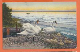 HB550, Cygne En Famille, 8657, Circulée 1922 - Vogels