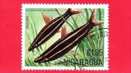 NICARAGUA  - Nuovo - 1981 - Pesci Tropicali - Fish - Anostomus - 1.85 - Nicaragua
