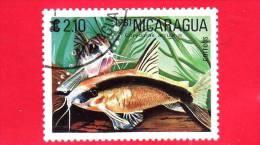 NICARAGUA  - Nuovo - 1981 - Pesci Tropicali - Fish - Corydoras Arcuatus - 2.10 - Nicaragua