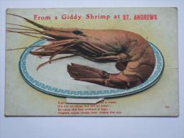 GB GEORGE V 1917 POSTCARD GIDDY SHRIMP FROM ST. ANDREWS VALENTINE`S MAILING NOVELTY - Humor