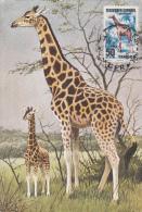 "Savanes D'Afrique Tropical ""girafe"" - France"