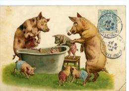 Cochons  La Famille !!chromo - Cochons