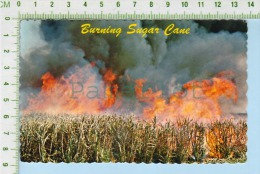 Sugar Cane   ( Sugar Cane Is Burning The Day Before It Is Harvested) Post Card Carte Postale - Agriculture