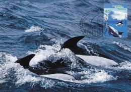 Australian Antarctic 1995 45c Hourglass Dolphins Maximum Card - Maximumkaarten