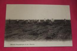Cp Deutsche Kriegsgefangene Bei Der Heuernte - Guerre 1914-18