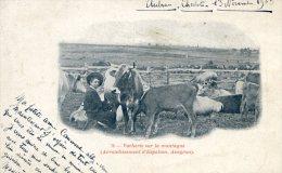 Aubrac - Vacherie Sur La Montagne - France