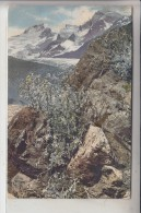 PHOTO - Photochromiekarte, Artemisia Mutellina, 1909 - Fotografie
