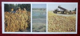 Drying Tobacco - Rice Fields - Harvesting Maize - 1984 - Kyrgystan USSR - Unused - Kirghizistan