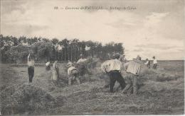 Environs De FAUVILLE - Battage Du Colza - France