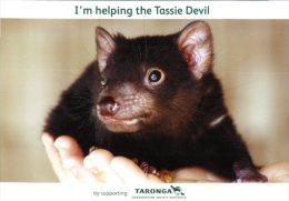 (333) Australia - TAS - Tassie Devil - Australie