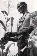 Afrique > Sénégal  Région De DAKAR Récolte Du Maïs -Voir Description*PRIX FIXE - Senegal