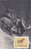 Carte-Maximum HONGRIE  N° Yvert 1695 (MOUFLON) Obl Sp Ill 1964 - Maximumkaarten