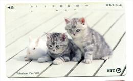 Télécarte NTT - Chat - Gatti