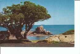 MELANESIEN  ROCHER A LA VOILE  NOUMEA   RARE  OHL - Postkaarten