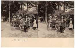 75 / PARIS - Jardin D´Acclimatation -Départ De La Voiture à Autruche (Attelage) - CARTE STEREO - Parks, Gardens