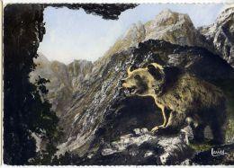 L'Ours Brun Des Pyrénées ,cpsm 10 X 15 N°120 éd Larrey--dentelée-env  1960-- - Ours