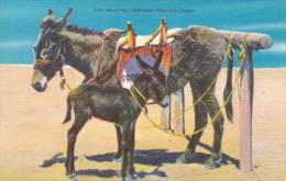013C/ Greetings From Colorado Ezels Donkeys ânes - Etats-Unis