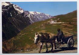 Ane--1982---Attelage D'âne En Montagne  ,cpm Photo Anselme Colard---belle Carte - Anes
