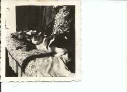 GATO NEGRO  JUNTO A GATO DE PELUCHE  ANIMALES  10 X 8 CM   PEQUEÑA FOTO   OHL - Photographs