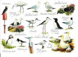 THEME OISEAUX / Jos N° 05554 : Les OISEAUX Du Bord De Mer / CPM VIERGE / Impeccable +++ - Oiseaux