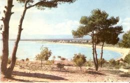 POSTAL DE SALOU DE LA PLAYA VISTA DESDE UN PINAR (RAYMOND) - Tarragona