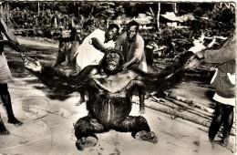 CONGO - GORILLE MALE ADULTE - VERSO CACHET BRAZAVILLE 8-10-1955. - Congo - Brazzaville