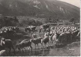 Sur Le Chemin De L'ALPE (349 Francou - Briançon) - Brebis, âne - Autres Communes
