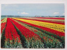 Holland - Pays-Bas