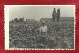 CROATIA--TOBACCO.,REAL PHOTO--FOTO JADRAN,IVANOVIC MARKO ZUPANJA--- - Tabac (objets Liés)