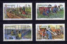 Venda - 1980 - Tea Cultivation - MNH - Venda