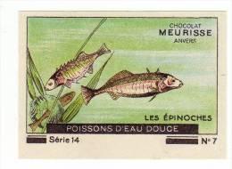 Meurisse - Ca 1930 - 14 - Les Poissons D'eau Douce, Freshwater Fish - 7 - Les épinoches - Chocolate