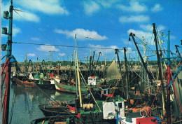 Zeebrugge   De Vissershaven - Zeebrugge
