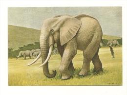 P. Barruel : Eléphant D'Afrique - Éléphants