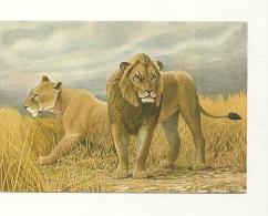 P. Barruel : Lion - Lions