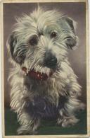 Hond - Chien - Dog - Chiens