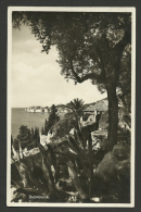 Yugoslavia, Seaside With Agaves, 1933. - Yougoslavie