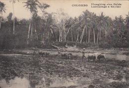 CEYLON  -  COLOMBO - Labourage A Ceylan - Sri Lanka (Ceylon)